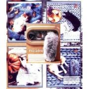 """Зошит шкільний 12 аркушів, лінія - """"Бріск"""" (Теплі коти) - ТВ-107-91"""
