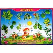 """Плакат А-2 (картон) """"Листья"""" ЭУ-П-27"""