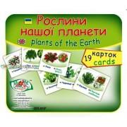 """Картки """"Рослини нашої планети"""" (19 карток), Эдельвейс ON-03У"""