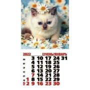 Календар магнітний на 2022 рік на спіралі (Білий кіт) - MNA-22