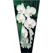 """Пакет ламинированный цветочный """"Орхидея"""" - POR-1433"""