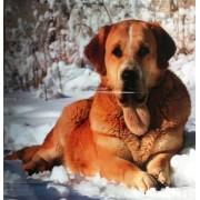 "Пленка самоклеющаяся (67х73 см) ""Собака на снегу"" - ПСКБ-12"